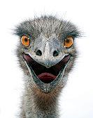 istock EMU (L) 157373251
