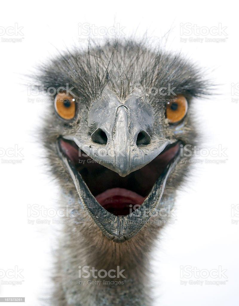 EMU (L) stock photo