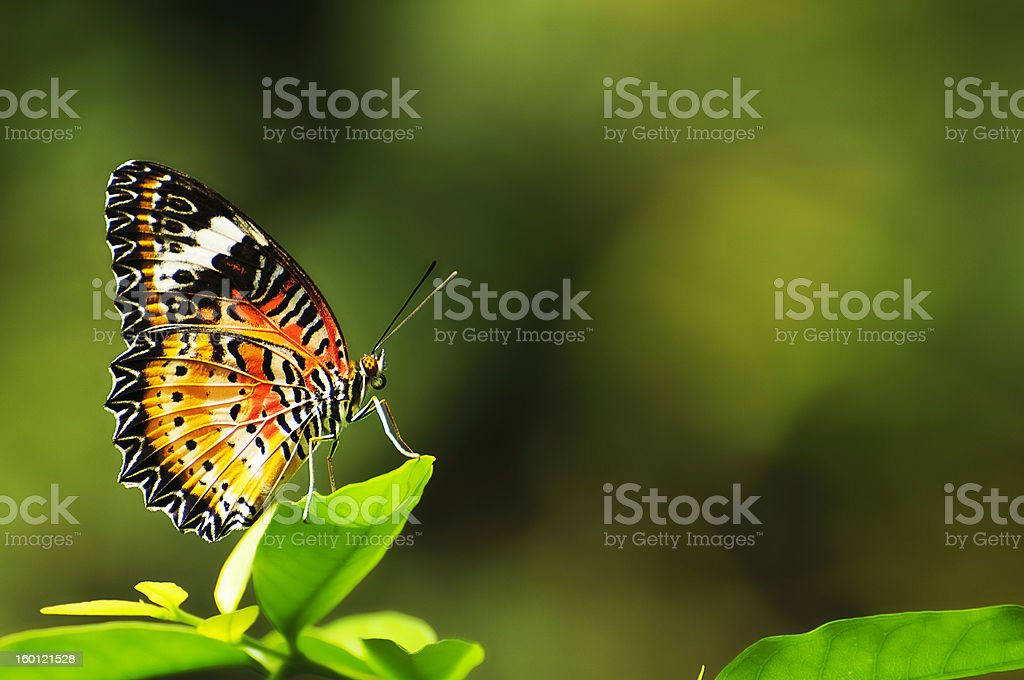 BUTTERFLY SERIES stock photo