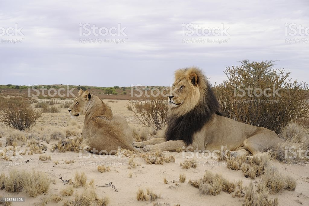 KGALAGADI TRANSFRONTIER PARK stock photo