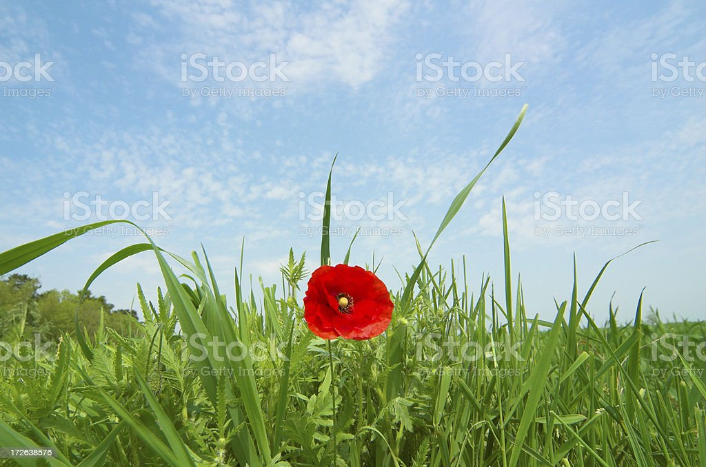 BLISS MEADOW royalty-free stock photo