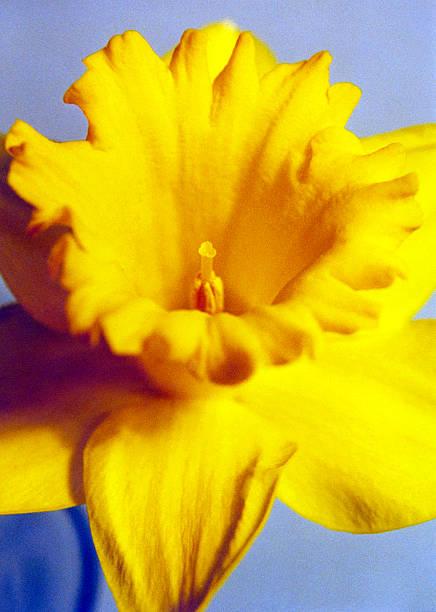 FLOWERS & PLANTS 05 stock photo