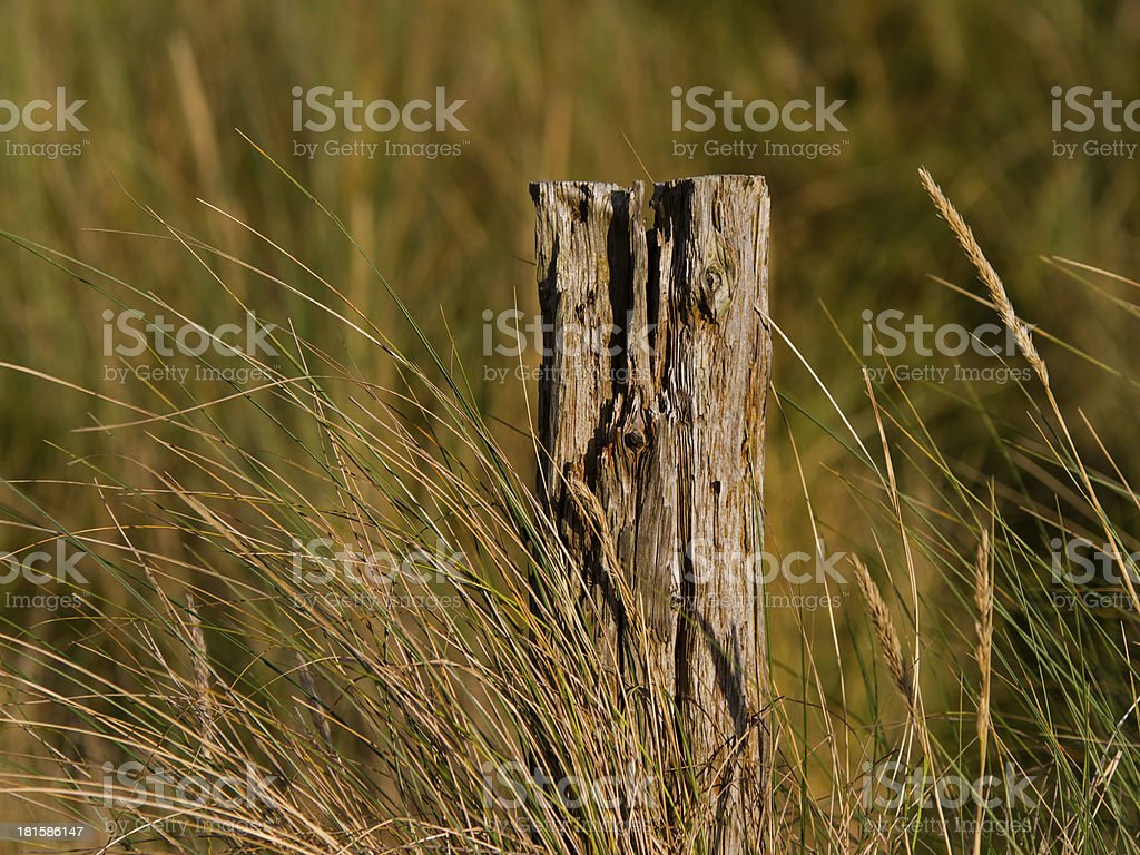 FINDHORN - I'M STILL STANDING royalty-free stock photo