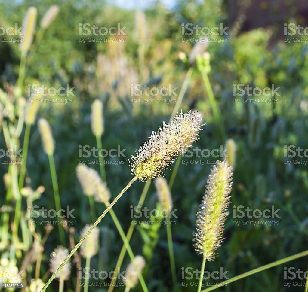Утренняя роса stock photo