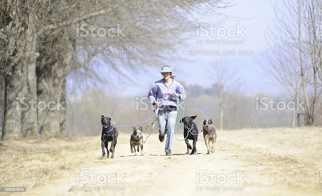 RUNNING WITH THE PACK stock photo
