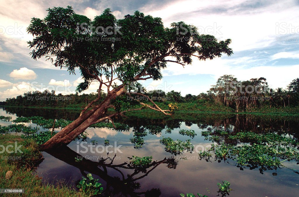 ORINOCO'S DELTA stock photo
