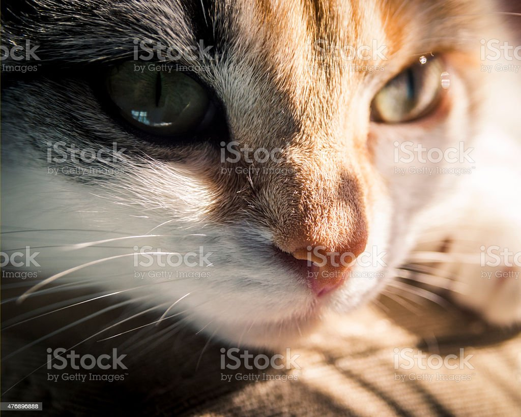 Кошка stock photo