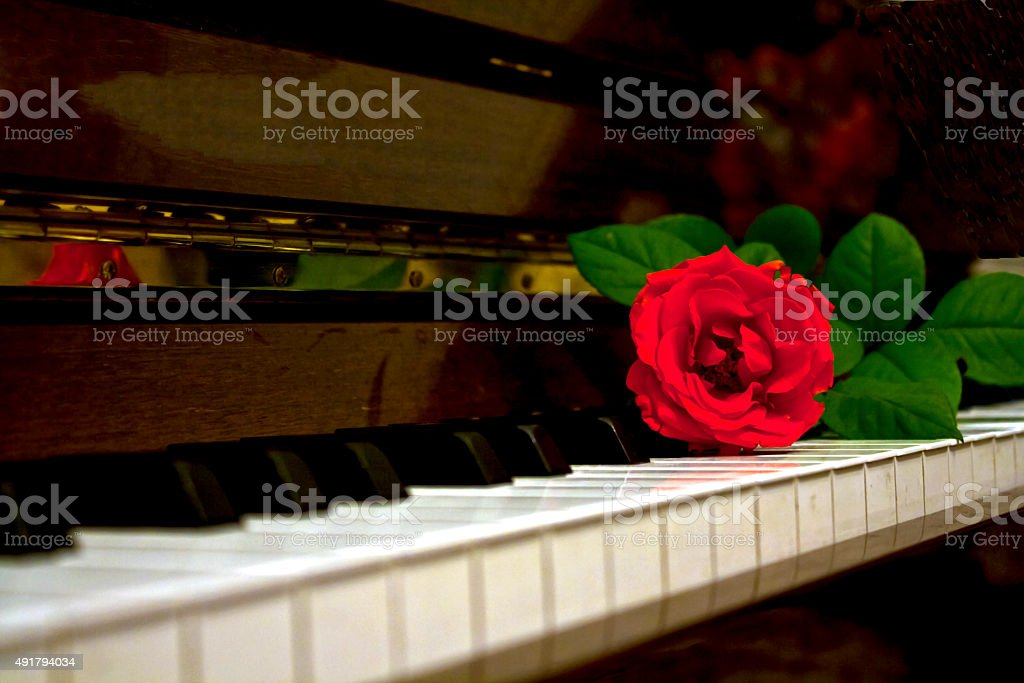 RED ROSE FLOWER ON PIANO stock photo