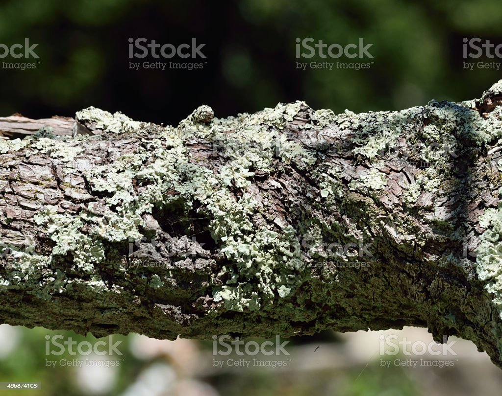 NATURAL ABSTRACT BACKGROUND. stock photo