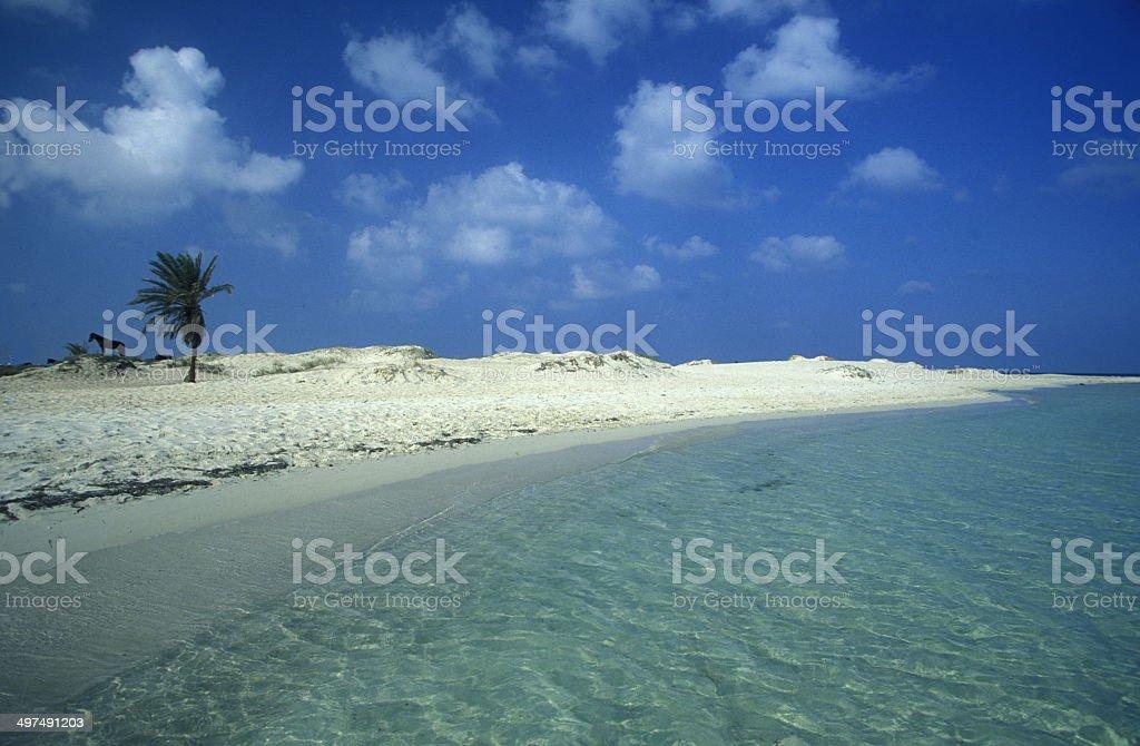 AFRICA TUNISIA DJERBA BEACH stock photo