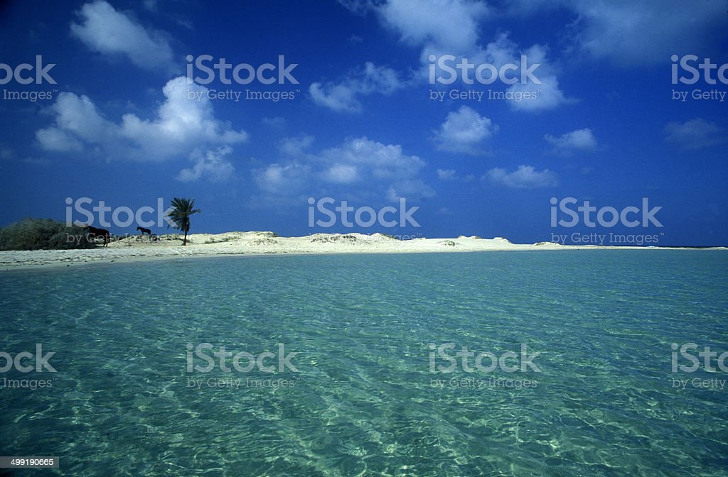 AFRIKA TUNISIA JERBA BEACH stock photo