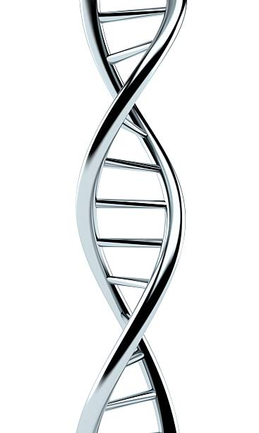 DNA DNA isolated on white background helix model stock pictures, royalty-free photos & images