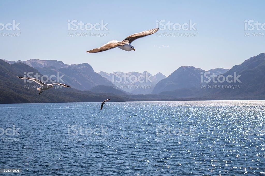 SEAGULLS, LAKE AND MOUNTAINS stock photo