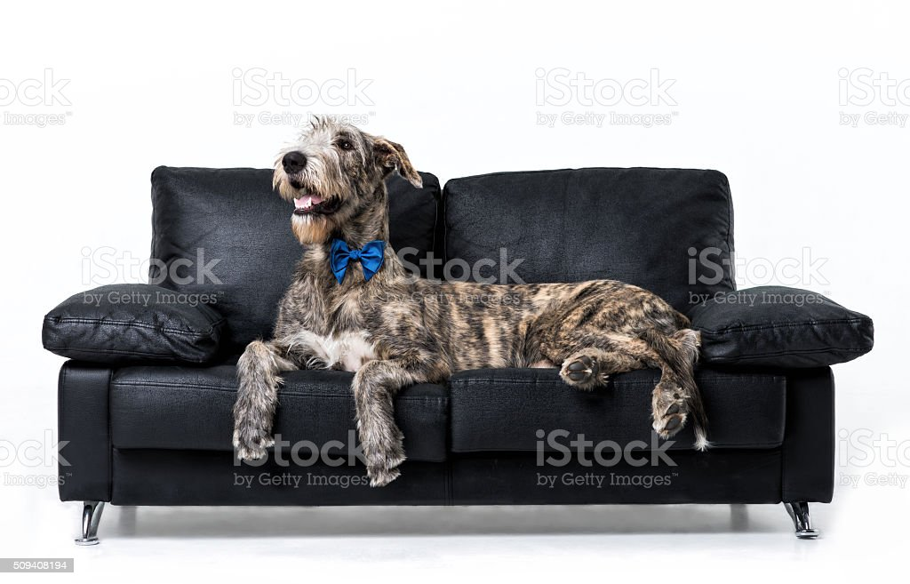 IW stock photo