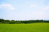 青空と初夏の草原