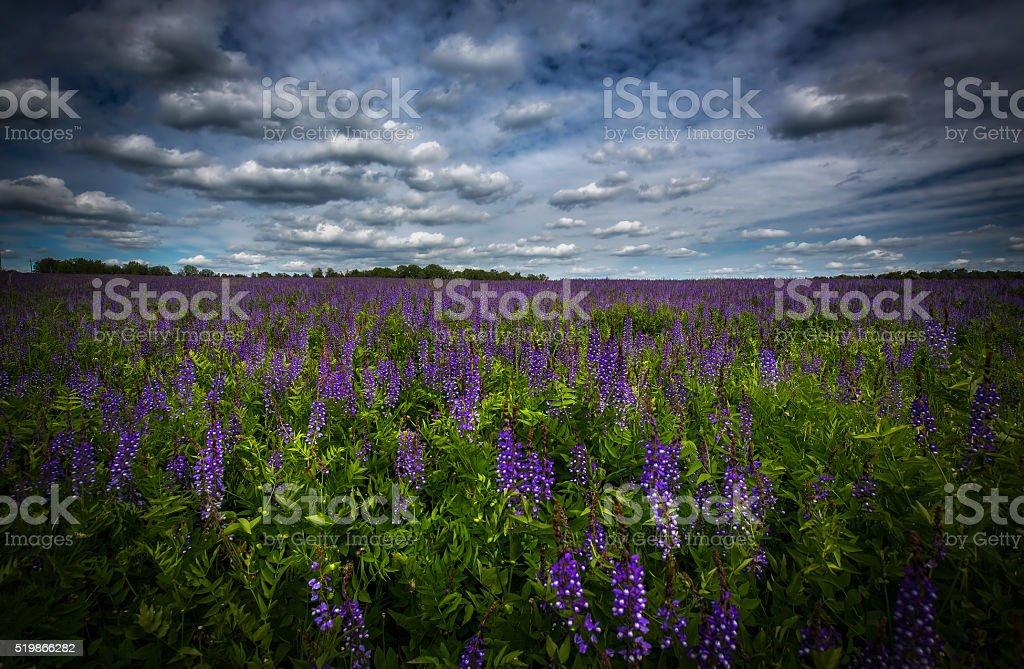 Цветочное поле royalty-free stock photo