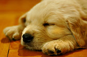 http://www.istockphoto.com/photo/cute-puppy-feeling-tranquil-49914836?st=d58013d