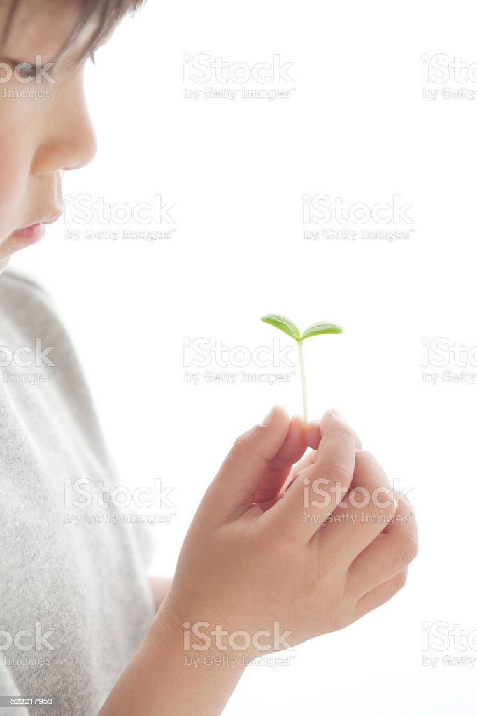 双葉を持つ男の子 stock photo
