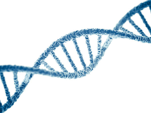 DNA DNA on white background. 3D render. helix model stock pictures, royalty-free photos & images