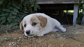 WOW~WHAT A CUTE!!!puppy,dog,cute,love,funny,young,animal,pet,isolated,white,adorable,little,mammal,canine,brown,happy,purebred,lovely,friend,beautiful,portrait,expression,sweet,playing,pedigree,doggy,curious,baby,domestic,nature,lying,comical,heart,together,care,family,fun,doggie,lazy,adorable,cutie,sweet,sweetie,oneday