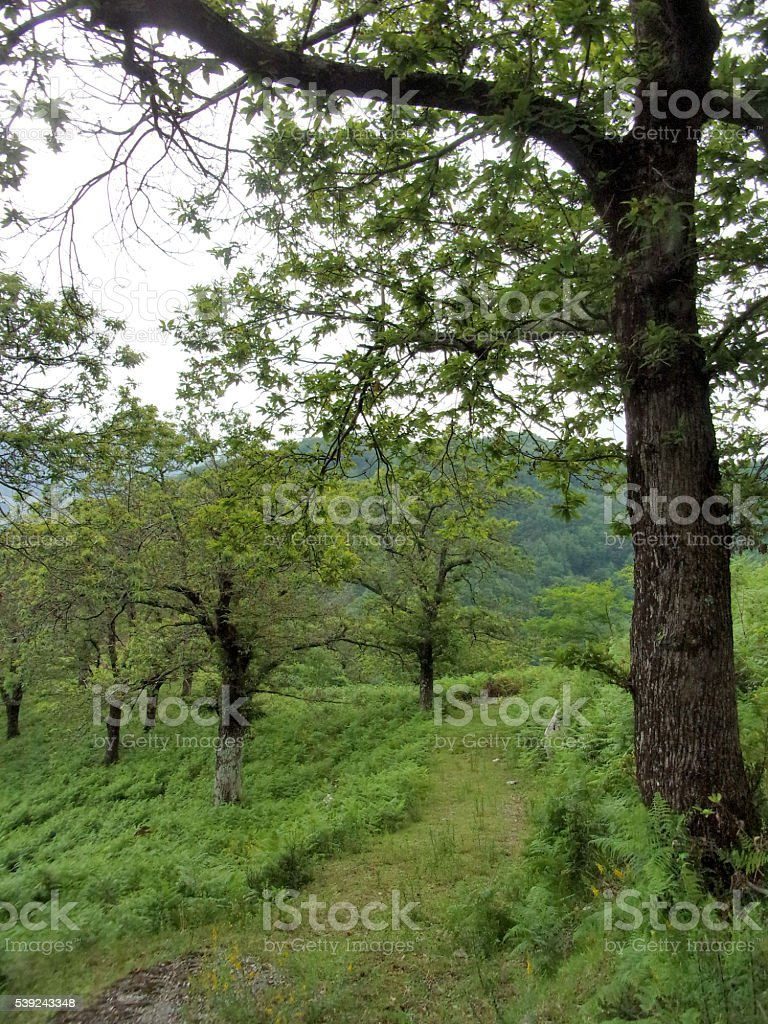 PAESAGGIO MONTANO royalty-free stock photo