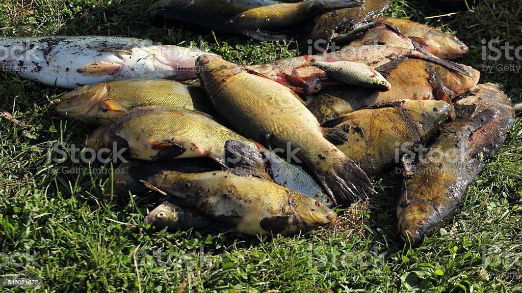Рыба stock photo
