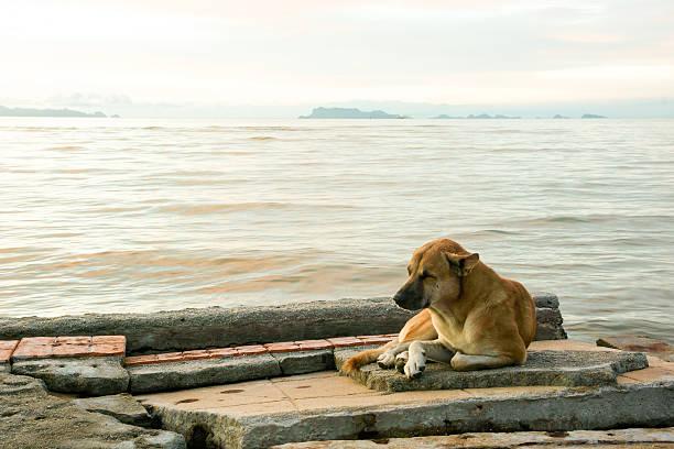 sleepy dog lying down on seaside-broken-footpath - dog looking at floor path stockfoto's en -beelden