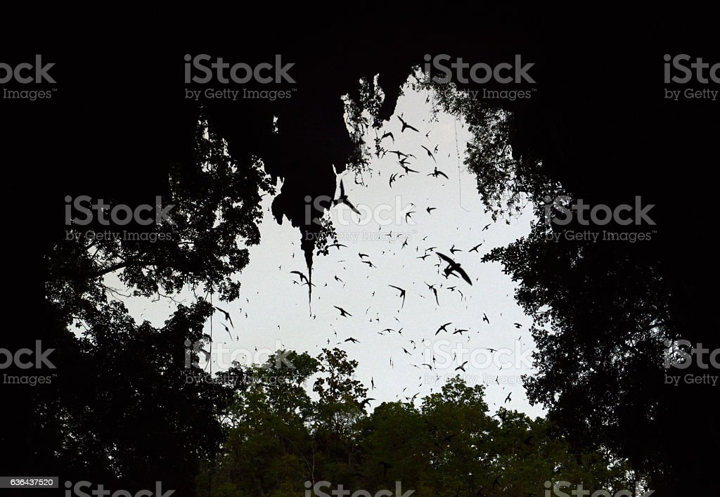 ASIA THAILAND SOPPONG SWIFTS BIRD CAVE stock photo