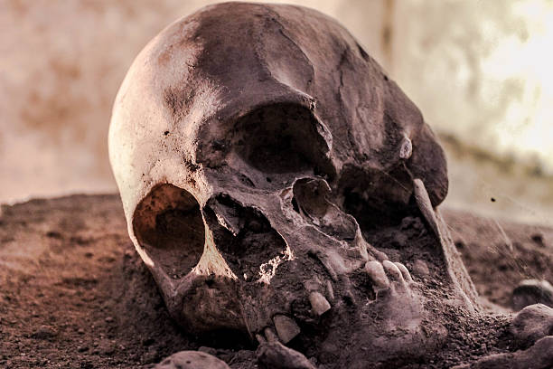 SKULL The skull of a monk from a 200 year old monastery lies still in Antigua Guatemala . human skull stock pictures, royalty-free photos & images