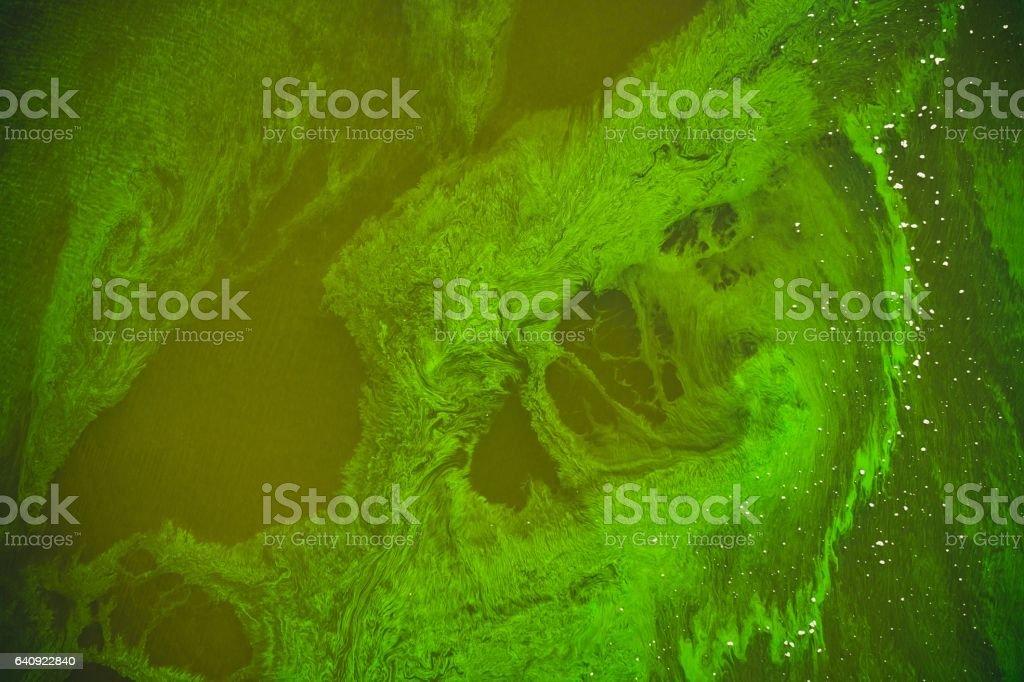 Сезонное цветение воды. Диатомовые водоросли stock photo