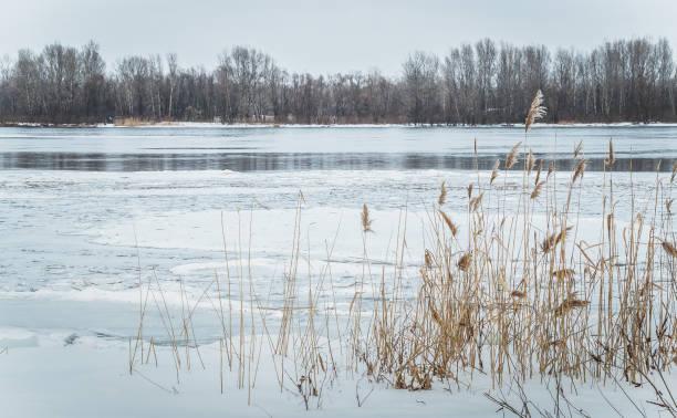 талая вода. пробуждение природы весной - paysage mois de mars photos et images de collection