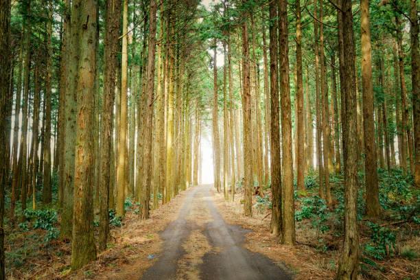 森の散歩道 - forest bathing foto e immagini stock