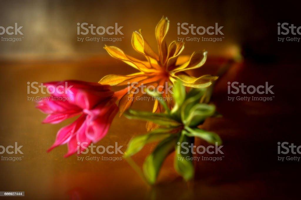 FULL COLOUR FLOWERS 2 foto de stock libre de derechos