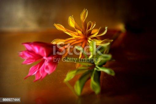 Fotografía de Full Colour Flowers 2 y más banco de imágenes de Amor