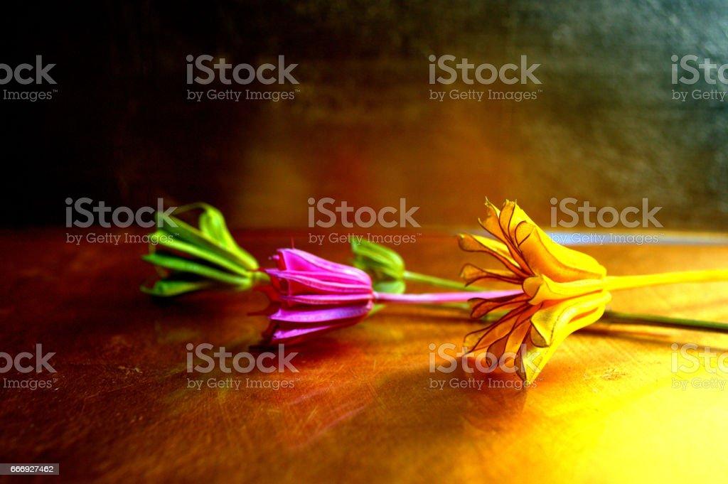 FULL COLOUR FLOWERS 1 foto de stock libre de derechos
