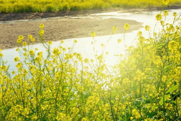 春の川岸 - 介護 zdjęcia i obrazy z banku zdjęć