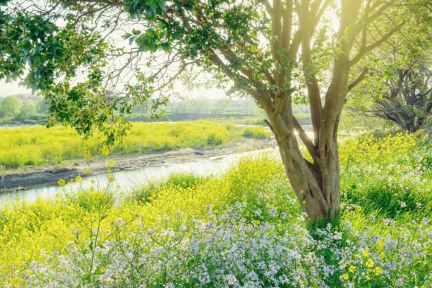 春の川辺 - 介護 zdjęcia i obrazy z banku zdjęć