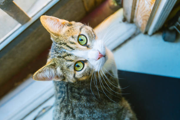 KITTY A kitten looking into a camera. undomesticated cat stock pictures, royalty-free photos & images