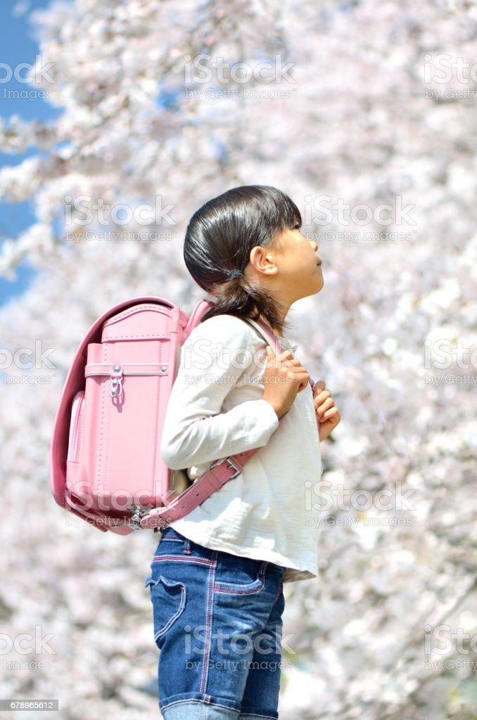桜と小学生の女の子 royalty-free stock photo