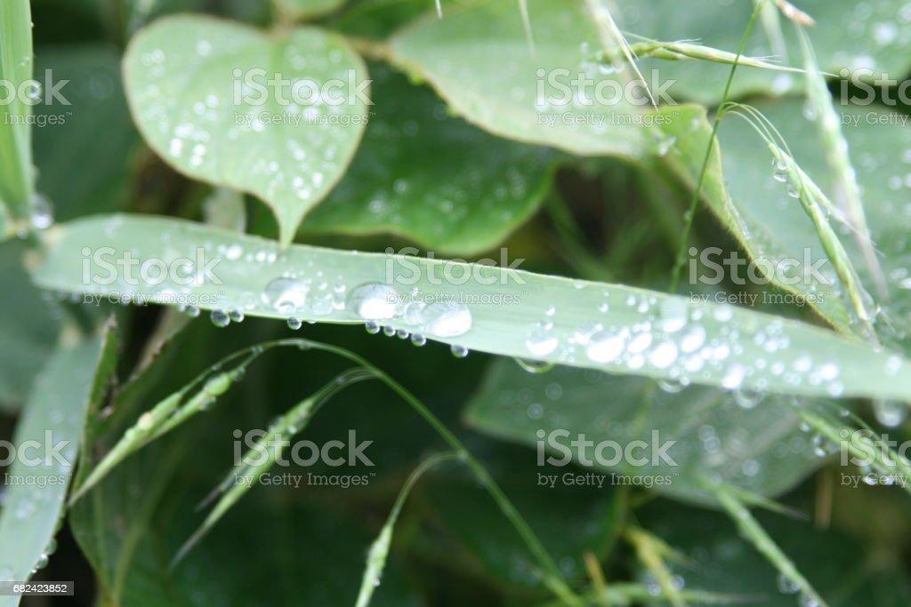 비온뒤에(water drop) royalty-free stock photo