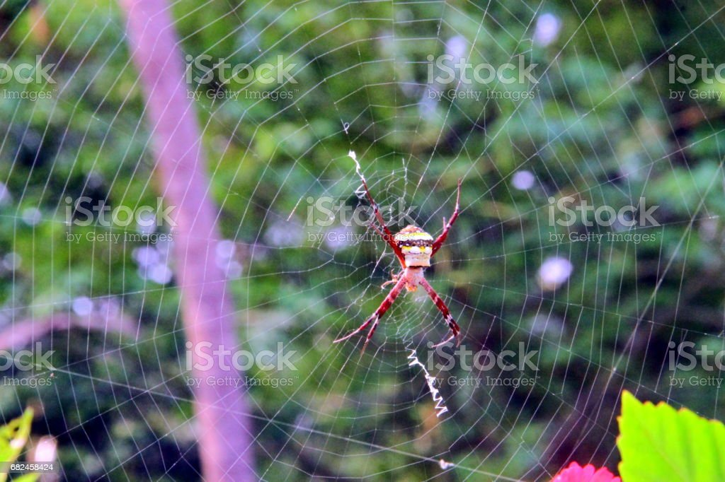 THE SPIDER royalty-free stock photo