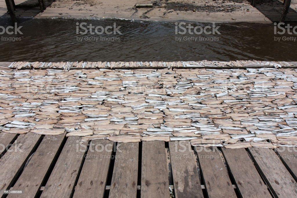 ブラジルの漁村での干物づくり royalty-free stock photo