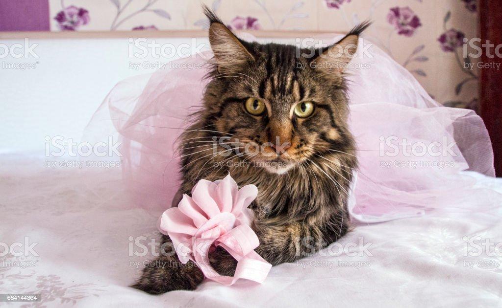 Кот royalty free stockfoto