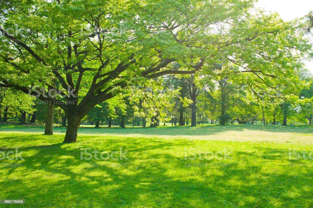 公園 木陰 photo libre de droits