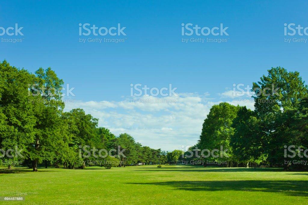 公園 芝生 stock photo