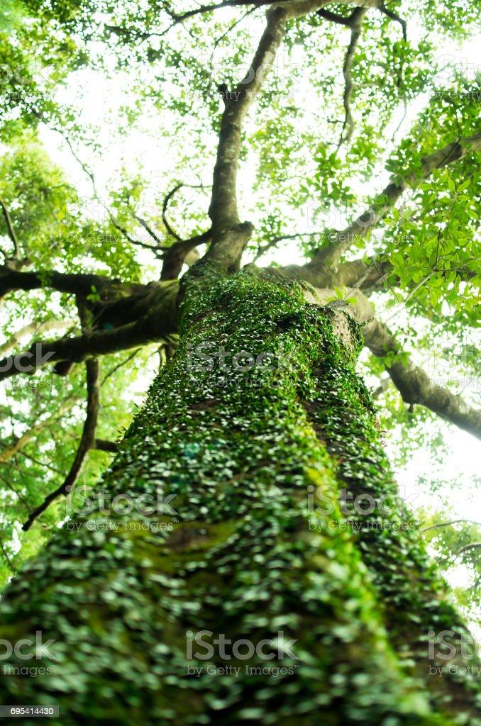 苔むした木 stock photo