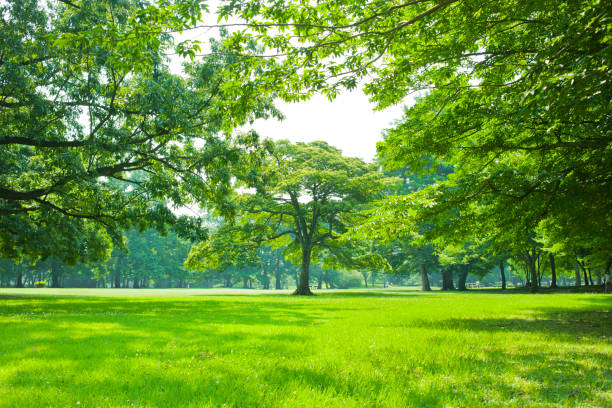 公園の芝生 - 木漏れ日 ストックフォトと画像