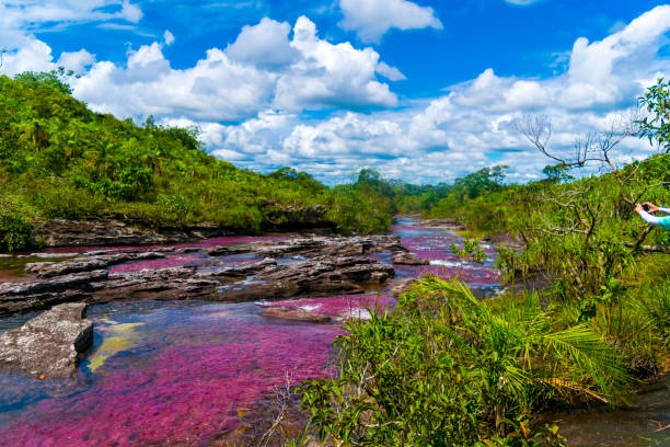 caño cristales - colombia stock photos and pictures