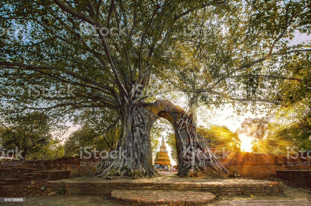 TREE ROOTS GROW ON WALL stock photo