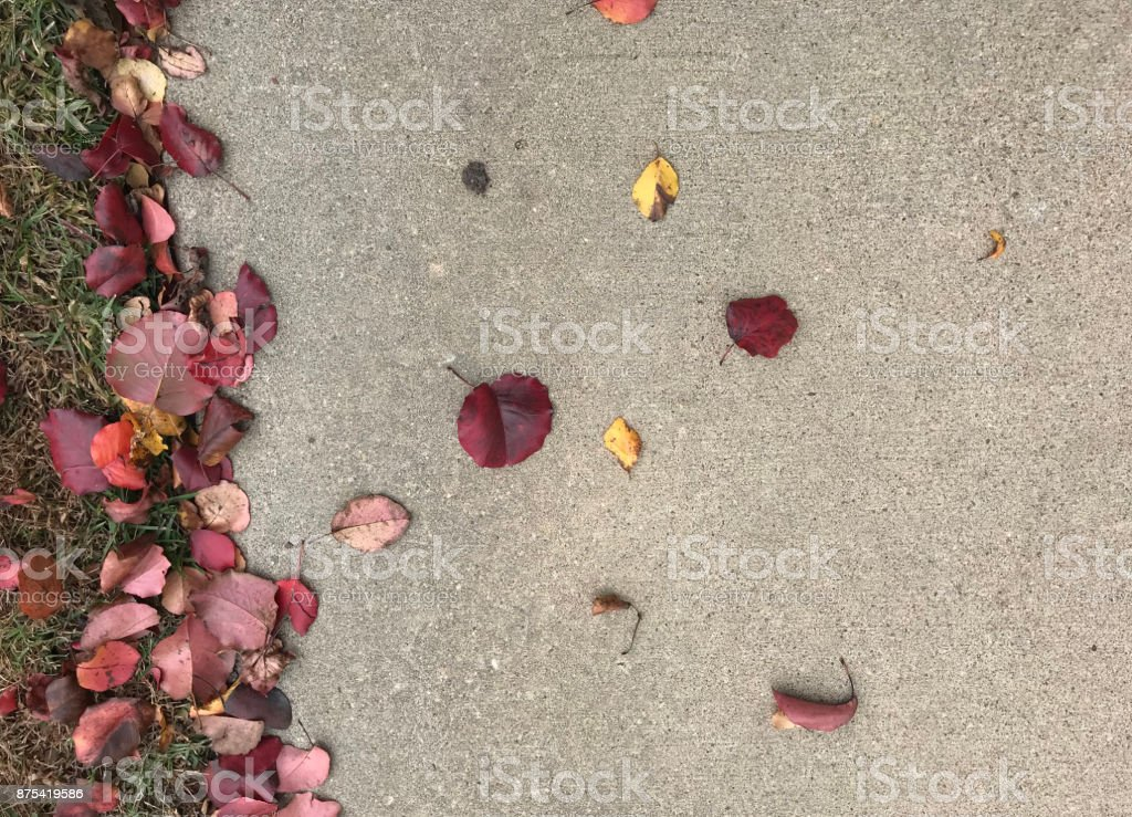 FALL LEAVES ON CONCRETE stock photo